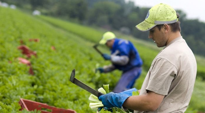 lucratori-romani-agricultura