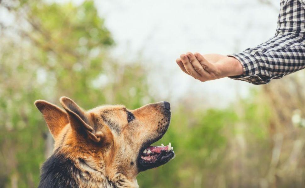 Cum să alegi un animal de companie