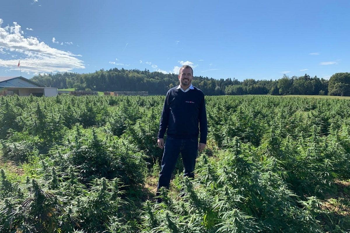 ferma cannabis